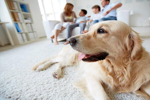 assurance-chien